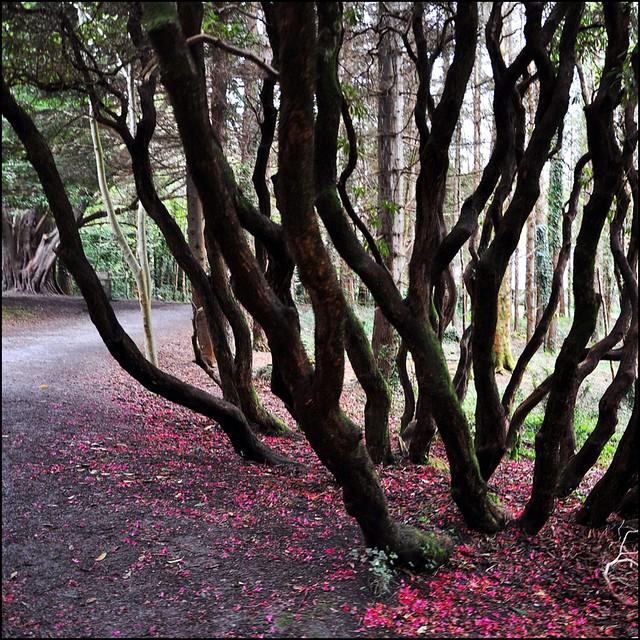 The fairytale Wood.