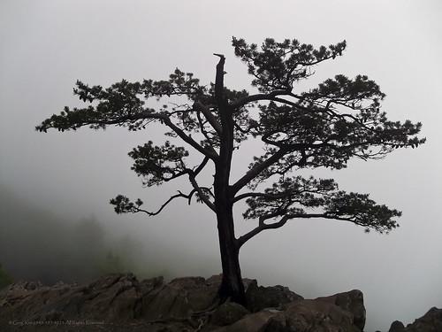 trees tree sky plants plant mountain mountains landscape cloudscape clouds cloud blueridgeparkway virginia blueridgemountains fog mist ravensroost love