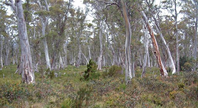 Derwent Forest