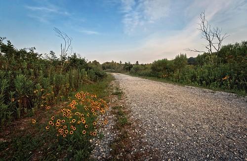 road flowers landscape morninglight spring weeds louisiana trail wildflowers hdr naturepreserve 10mm canonefs1022mmf3545usm mrgreenjeans gaylon blackwaterconservationarea 3shothdr oloneo gaylonkeeling