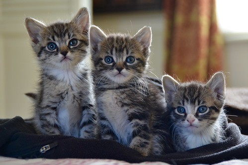 More kittens | by Paul Schadler