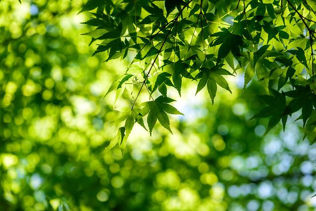 Fresh green #4