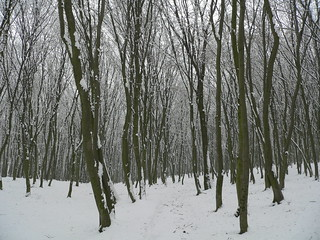 Winter Forest | by mbalazs2