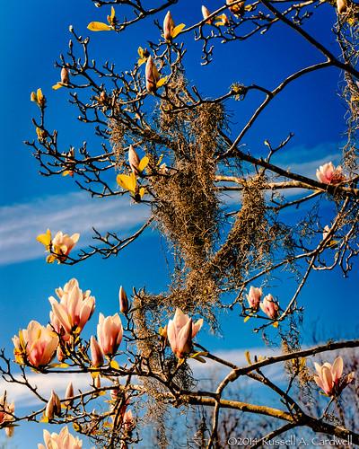 park flowers sunset sky flower nature canon garden moss spring texas berries magnolia botanicalgarden goldenhour beaumont tyrrellpark