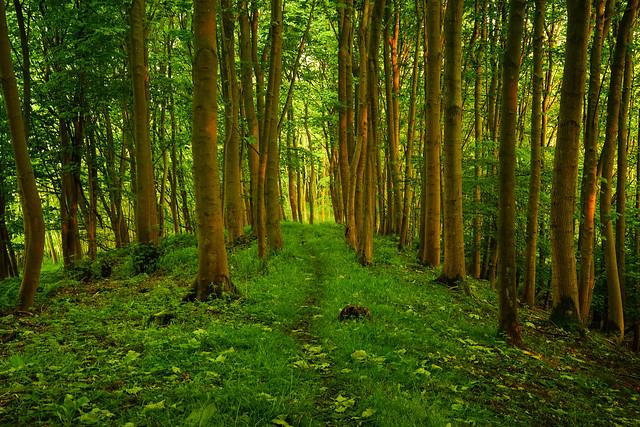 Maple Leaf Path