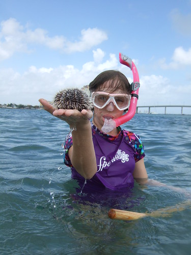 Rachael with a west indian sea egg