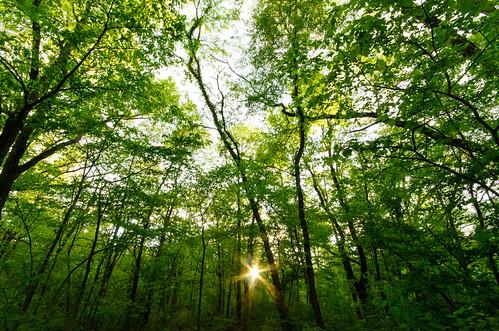 trees sunset sun forest campground diffraction starvedrockstatepark sigma1020mmf456exdc d7000 lightroom5