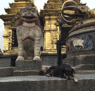 Just a dog at the Monkey Temple | by The Advocacy Project