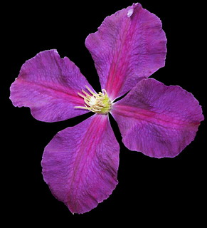 Flower in Hawthorne District   by sandy richard