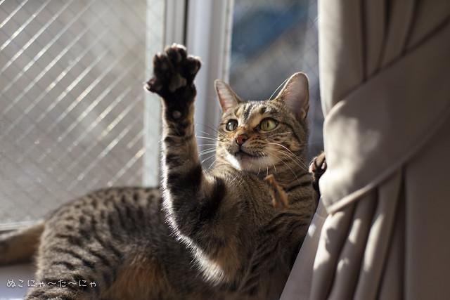 Freeze! Cat Dancer
