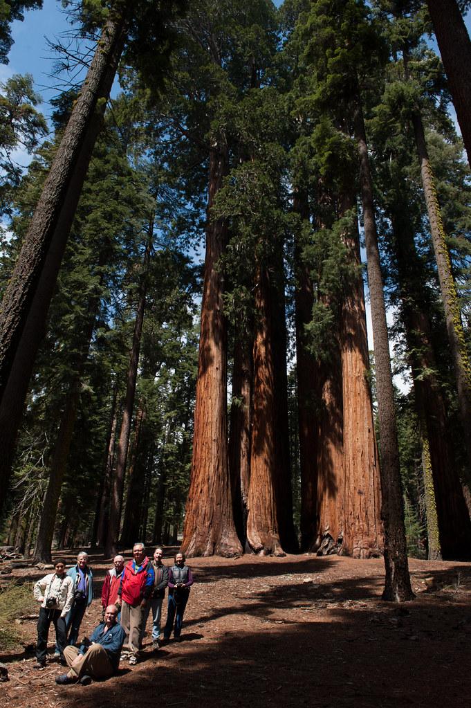Yosemite/Sequoias National Park Workshop
