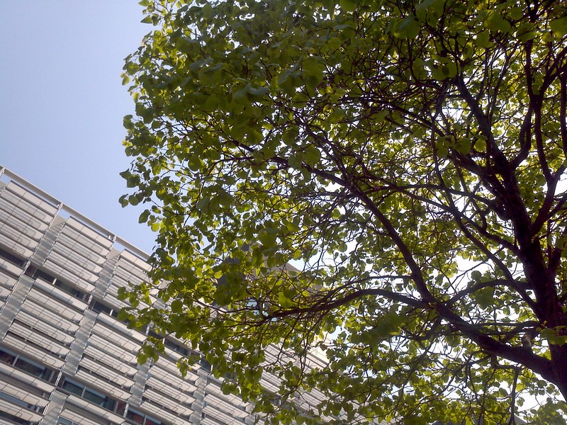 Tree, BC, sky