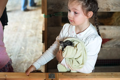 Baby Animals at Indian Ladder Farms - Altamont, NY - 2012, May - 06.jpg by sebastien.barre