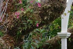 Dublin Botanical Gardens