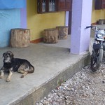 Dog and motercycle, Maubissi
