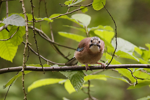 Jay 01 | by Mike G Photos