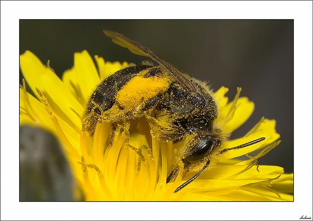 Locura por el polen