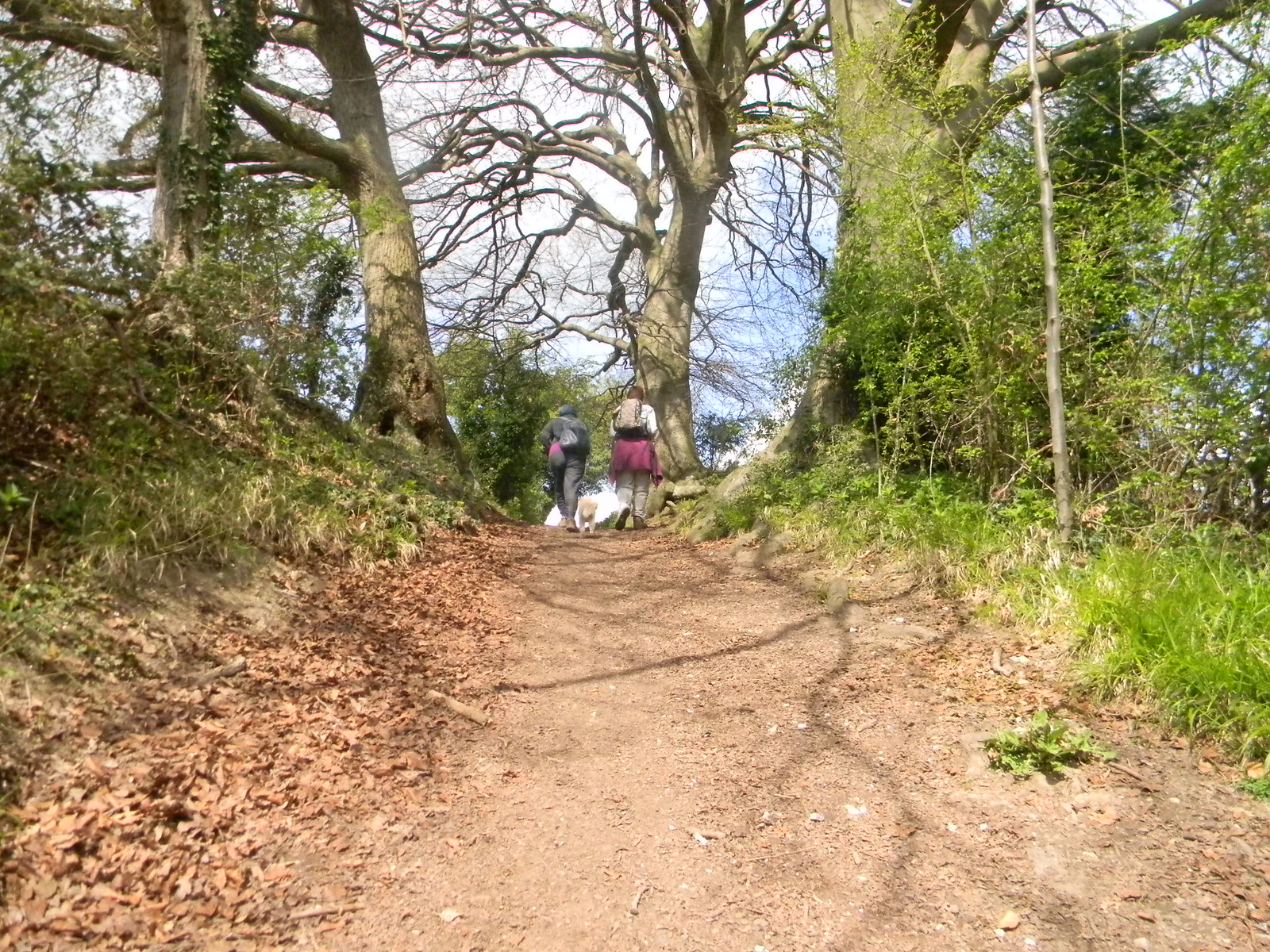 End of the steep bit Pangbourne Circular