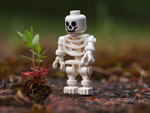 skeleton nature fan