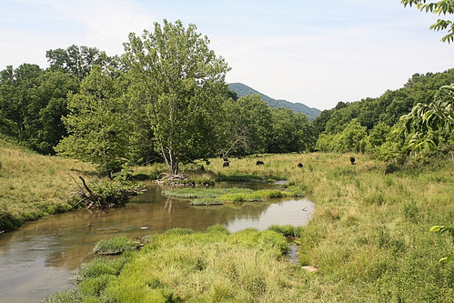 rural creek virginia stream farm scottcounty bigmoccasincreek