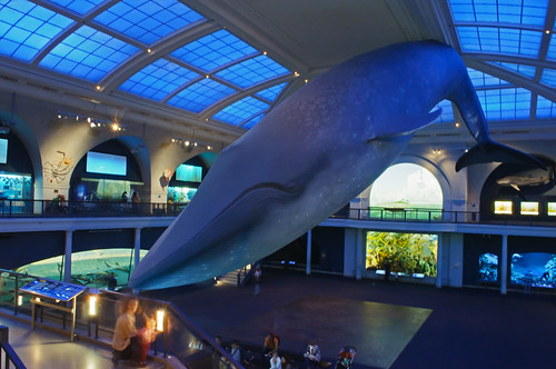 Marine Life Hall, American Museum of Natural History | by InSapphoWeTrust