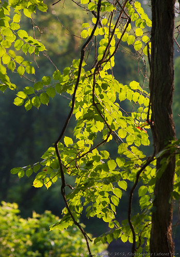 park leaves sunrise river backlighting hawriver backlitleaves nikond700 oldmilldam swepsonvillenc