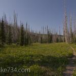 Flattop Mountain Meadow