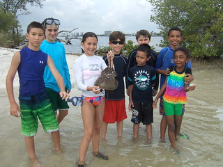 group finds a horseshoe crab