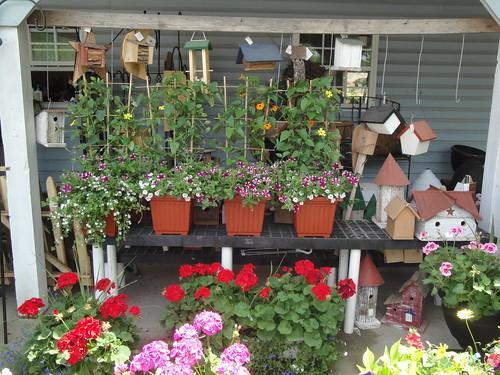 Zimmerman's Greenhouse, Loveville