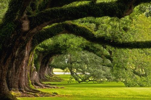 tree green nikon louisiana branches getty gettyimages oaktrees d300 oakalleyplantation happyphotographer mygearandme mygearandmepremium mygearandmebronze mygearandmesilver mygearandmegold mygearandmeplatinum mygearandmediamond topphotospots tpslandscape amyhudechek