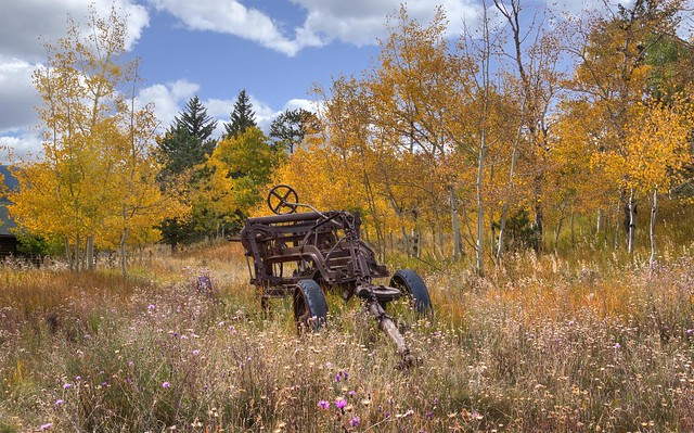 Rust and Gold - Red Feather Lakes, Colorado