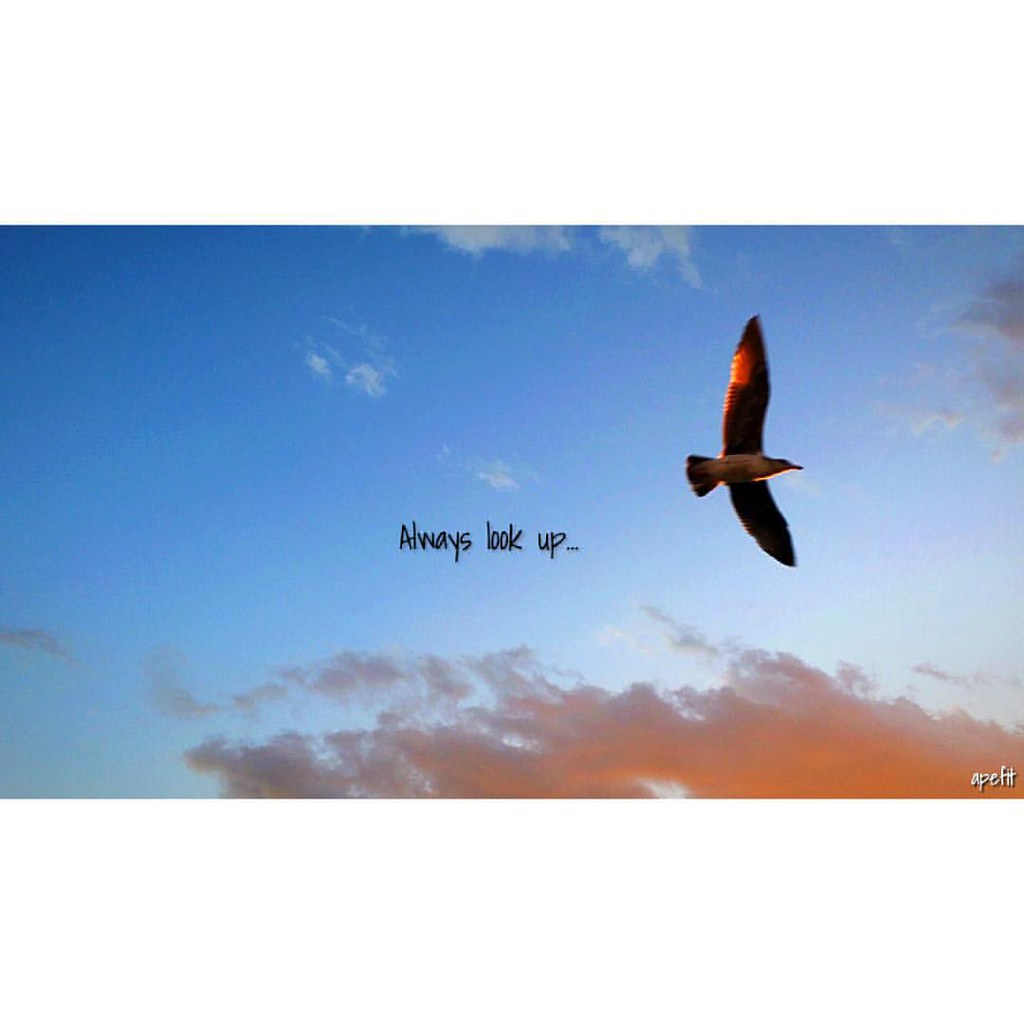 Always Look Up Quotes Venicebeach Sky Seagull Bird Flickr