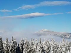 Pohled na Sněžku z louky u Černé boudy