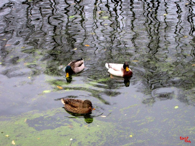 Nel lago - In the lake