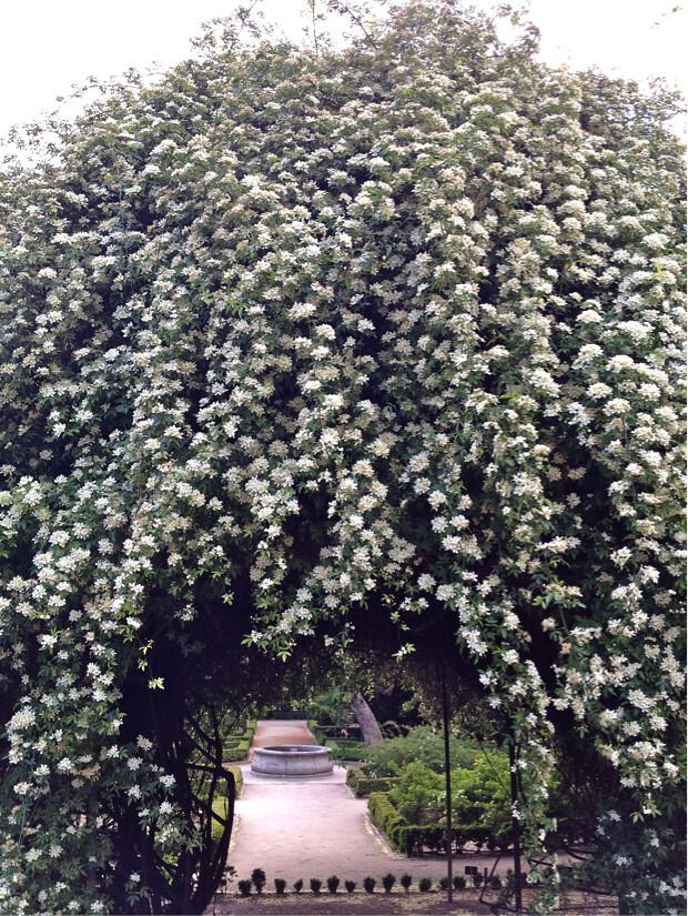 Ryan McGonagill blog Botanical gardens