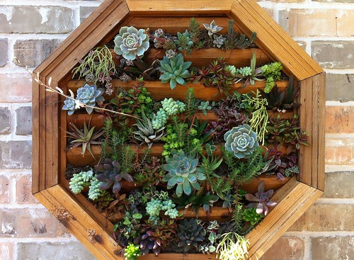 Succulents planted in thrift store find | by tex-anne