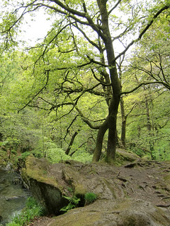 Trees, Stock Ghyll Park, Ambleside | by Phil Masters