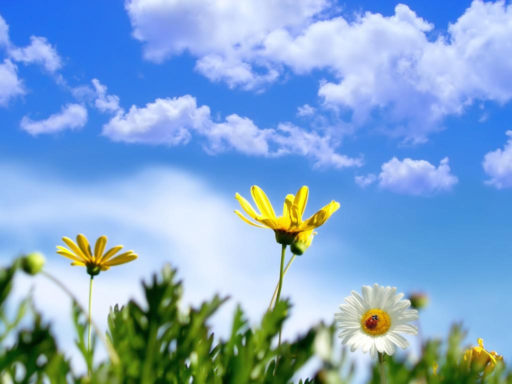 Tratincice Download Besplatne Pozadine Proljeca Prirode Za