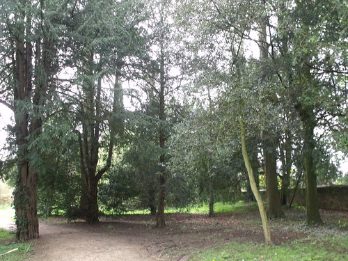 Sherborne Castle & Lakeside Gardens - trees | by ell brown