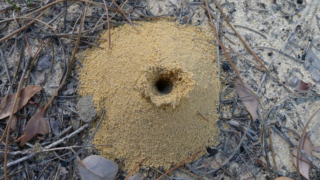 Funnel Ant hole as seen by an eagle