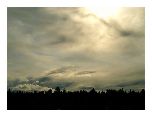 trees sunset sky clouds washington bellevue