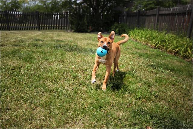 Fetch & Fly