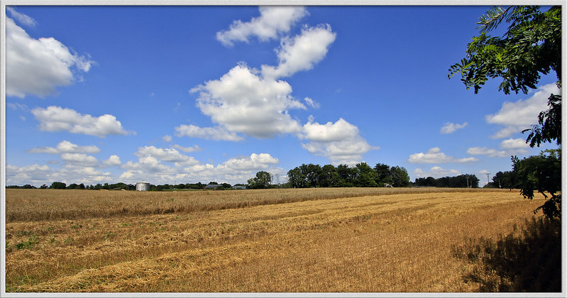 NC farmland, Piedmont area