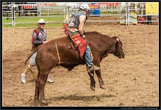 2014_Rodeo_20140412_Dungog_7398 | by Seeking Nature | Aus