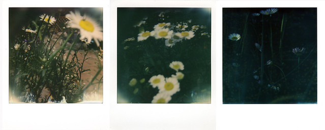 summer, and the daisies appear