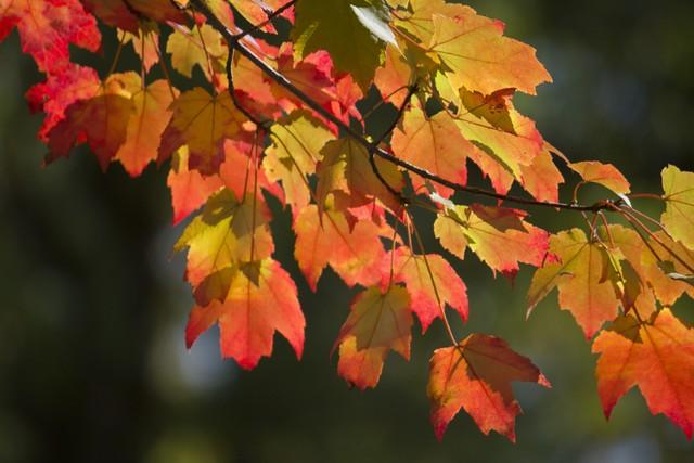 Fall Leaves No.4