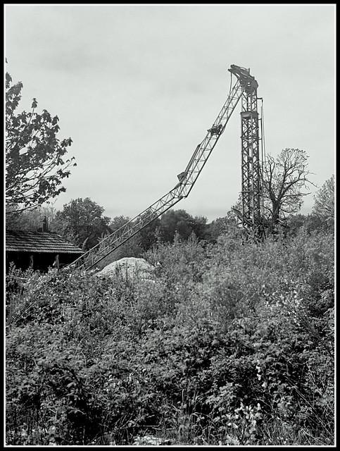 Dead Crane