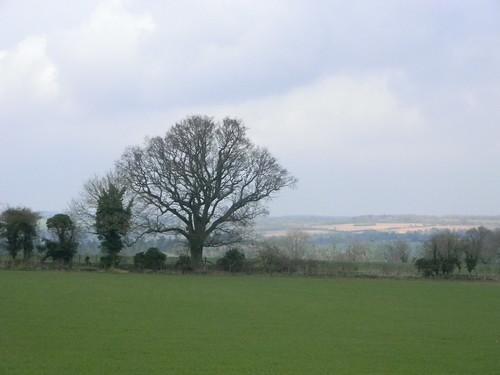 Tree Overton Circular