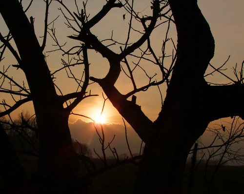 light sun tree nature landscape poland polska jacek soe zgorzelec lowersilesia piensk platinumheartaward mygearandme mygearandmepremium mygearandmebronze blinkagain
