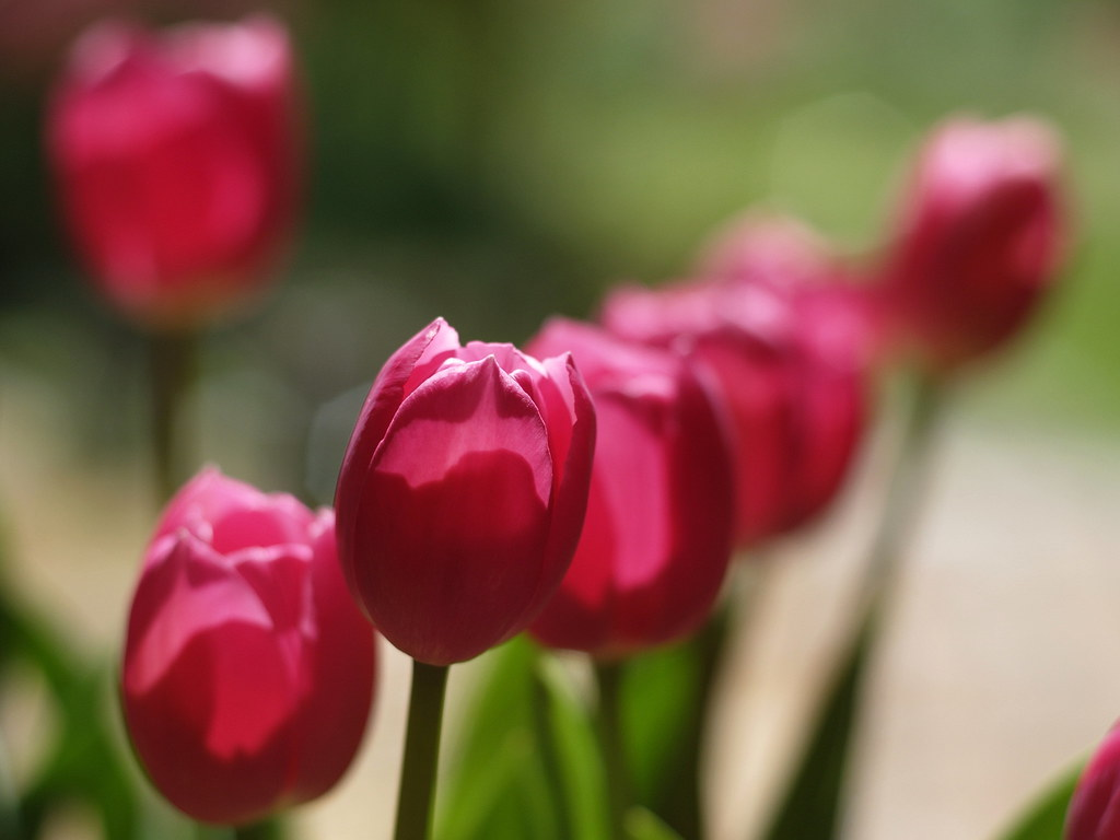 Pink bokeh 2